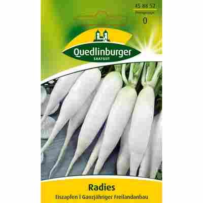 Radies 'Eiszapfen'
