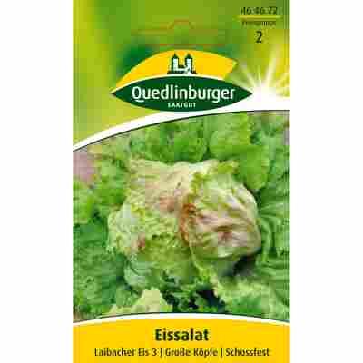 Eissalat 'Laibacher Eis 3'