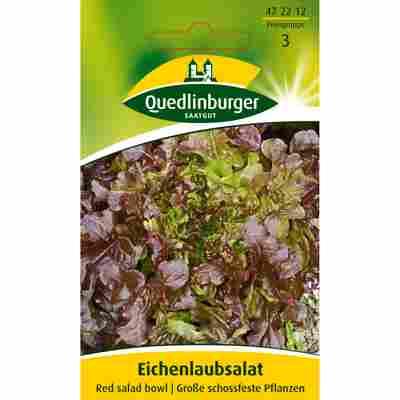 Eichenlaubsalat 'Red salad bowl'