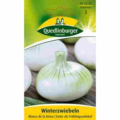 Winterzwiebel 'Blanca de la Reina'
