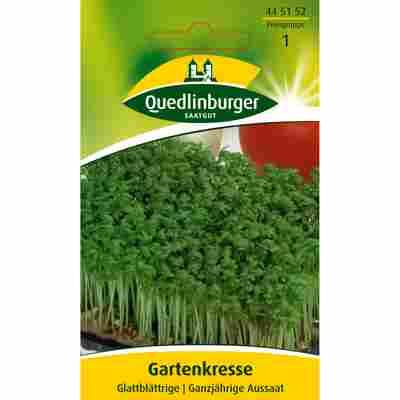 Gartenkresse Glattblättrige