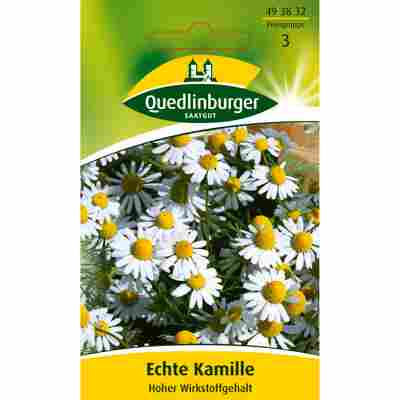 Kamille 'Echte- Bodegold'