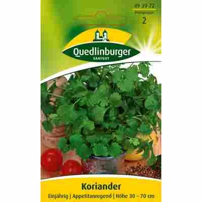 Koriander 'Thüringer'