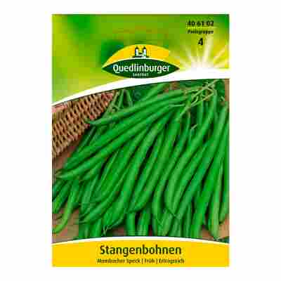 "Stangenbohne ""Mombacher Speck"""