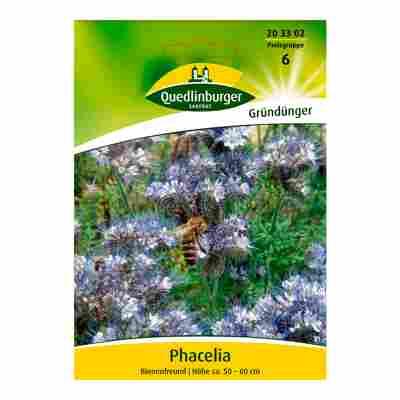 """Phacelia """"Bienenfreund"""""""