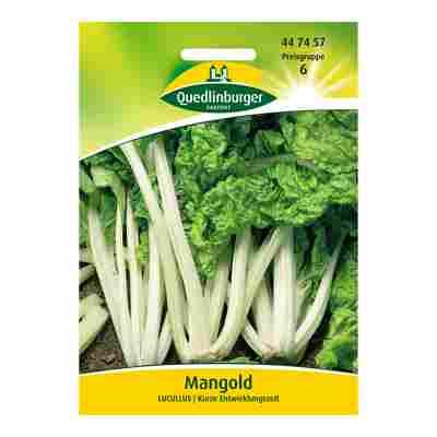 "Mangold ""Lucullus"""