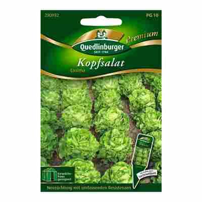 """Kopfsalat """"Cosima"""" 150 Stück"""