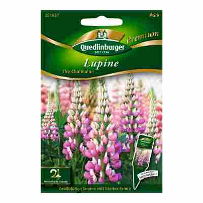 """Lupine """"The Chatelaine"""""""