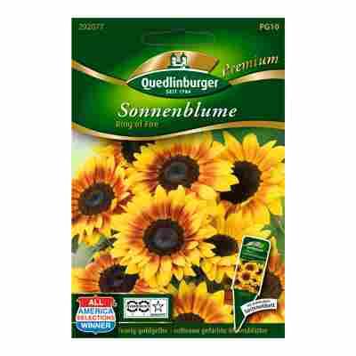 """Sonnenblume """"Ring of Fire"""" 15 Stück"""