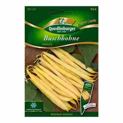 """Buschbohne """"Sonesta"""""""