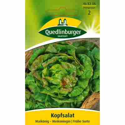Kopfsalat 'Meikoningin'