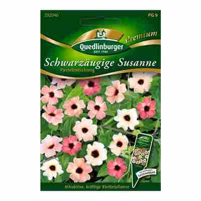 """Schwarzäugige Susanne """"Pastellmischung"""" 5 Stück"""