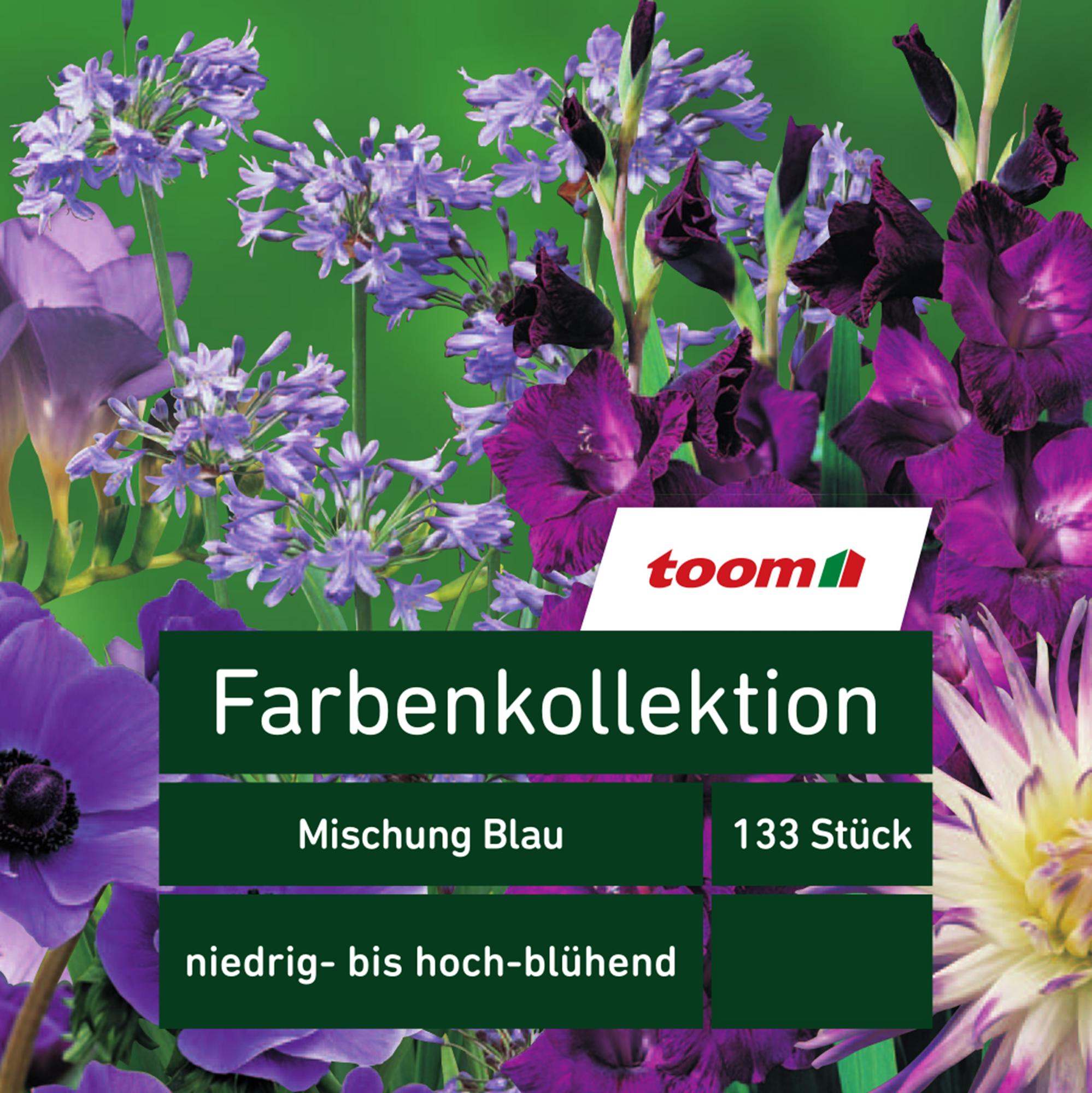 toom Blumenzwiebeln Farbenkollektion 'Mischung Blau' 133 Stück