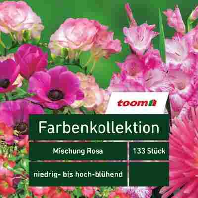 Blumenzwiebeln Farbenkollektion 'Mischung Rosa' 133 Stück