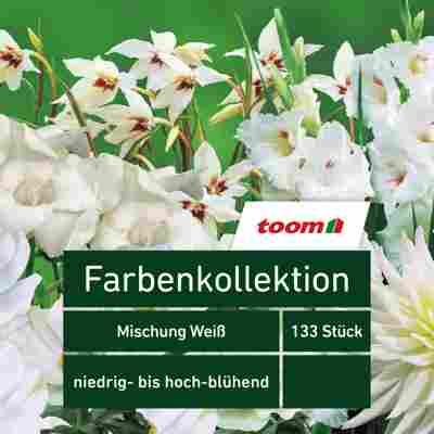 Blumenzwiebeln Farbenkollektion 'Mischung Weiß' 133 Stück