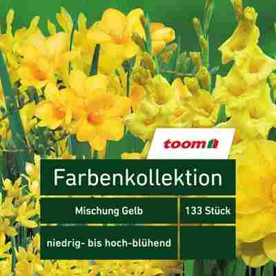 Blumenzwiebeln Farbenkollektion 'Mischung Gelb' 133 Stück