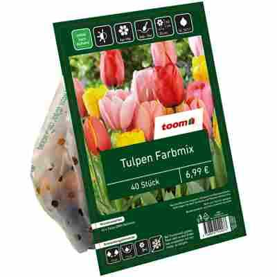 Tulpen-Mix ungefüllt 40 Zwiebeln