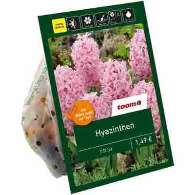Hyazinthen rosa 3 Zwiebeln