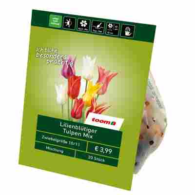 Lilienblütige Tulpen 'Mix' 20 Zwiebeln
