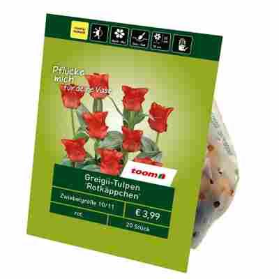 Greigii-Tulpen 'Rotkäppchen' rot 20 Zwiebeln