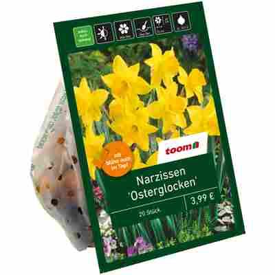 Osterglocken gelb 20 Zwiebeln