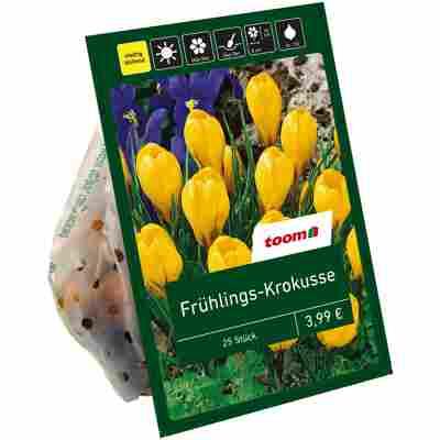 Frühlings-Krokusse gelb 25 Zwiebeln