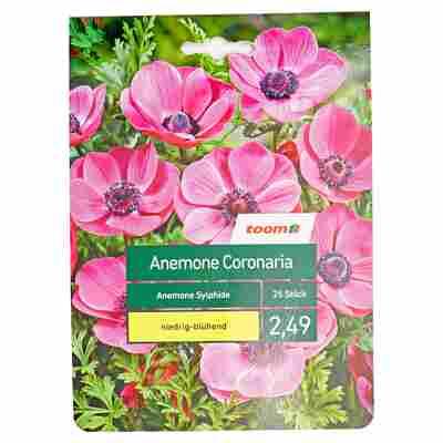 Anemone 'Sylphide' 25 Stück