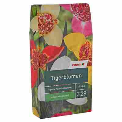 """Blumenzwiebeln """"Tigerblumen"""" Tigridia Pavonia Mischung 25 Stück"""