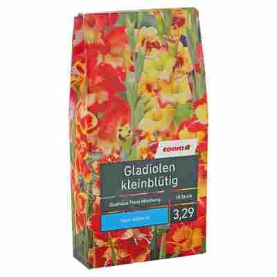 """Blumenzwiebeln """"Gladiolen kleinblütig"""" Gladiolus Flevo Mischung 10 Stück"""