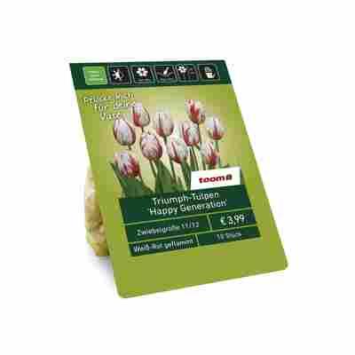 Triumph-Tulpen 'Happy Generation' weiß-rot geflammt 10 Zwiebeln