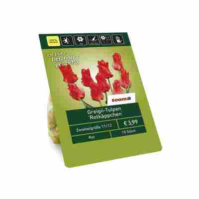 Greigii-Tulpen 'Rotkäppchen' rot 10 Zwiebeln