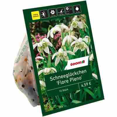 Schneeglöckchen 'Flore Pleno' weiß 10 Zwiebeln