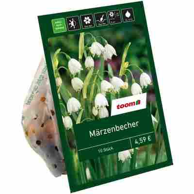 Sommer-Knotenblume 'Aestivum' weiß 10 Zwiebeln
