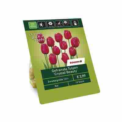 Gefranste Tulpen 'Crystal Beauty' rot 10 Zwiebeln