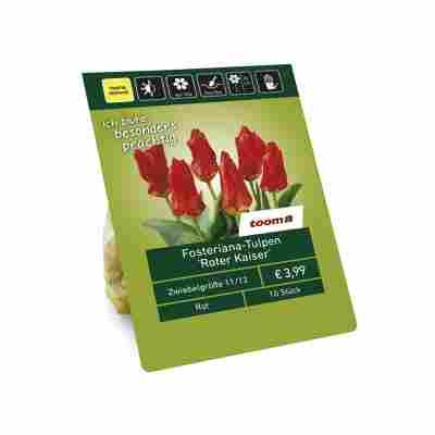 Fosteriana-Tulpen 'Roter Kaiser' rot 10 Zwiebeln