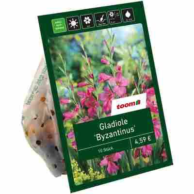 Wild-Gladiolen 'Byzantinus' purpur-rosa 10 Zwiebeln