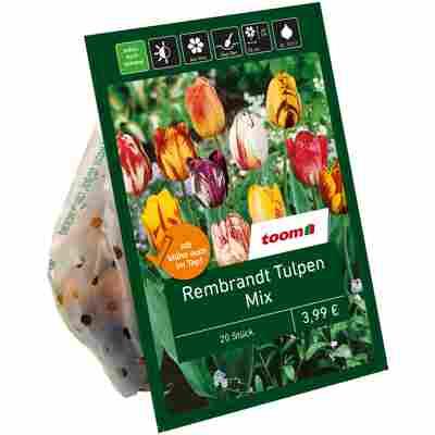 Rembrandt-Tulpen-Mix 20 Zwiebeln