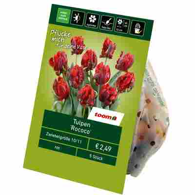 Tulpen 'Rococo' rot 5 Zwiebeln