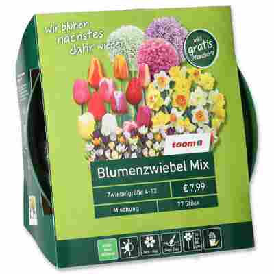 Blumenzwiebel-Mix bunt 77 Zwiebeln inkl. Pflanzkorb