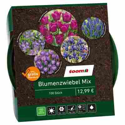 Blumenzwiebel-Mix blau 100 Zwiebeln inkl. Pflanzkorb