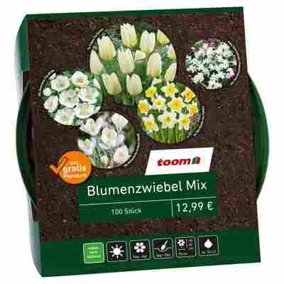 Blumenzwiebel-Mix weiß 100 Zwiebeln inkl. Pflanzkorb