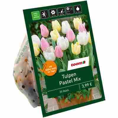 Tulpen 'Pastell-Mischung' 20 Zwiebeln