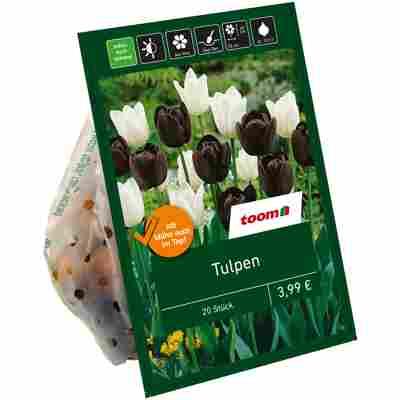 Tulpen-Mix dunkel-weiß 20 Zwiebeln