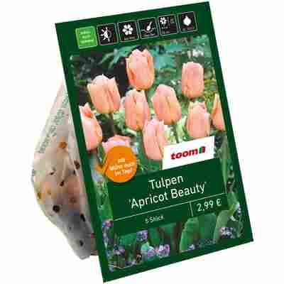 Tulpen 'Apricot Beauty' lachsfarben 5 Zwiebeln
