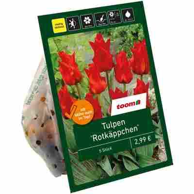 Tulpen 'Rotkäppchen' rot 6 Zwiebeln