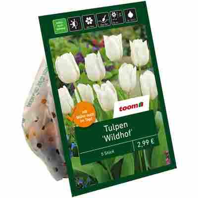 Tulpen ' Wildhof' weiß 7 Zwiebeln