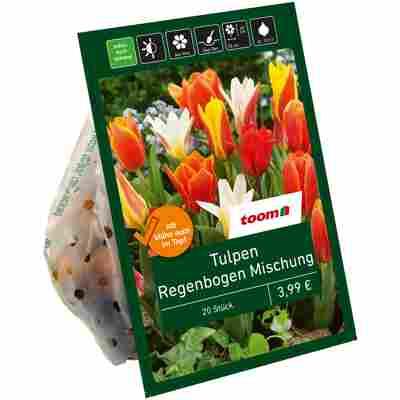 Botanische Tulpen 'Regenbogen' 20 Zwiebeln