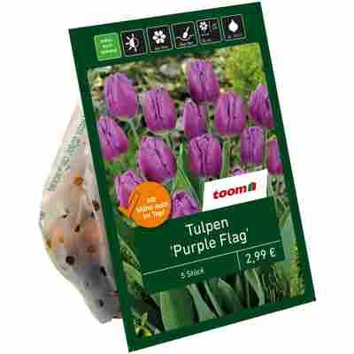 Tulpen 'Purple Flag' violett 7 Zwiebeln