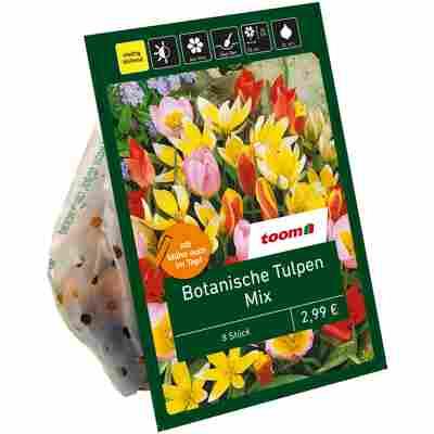 Botanische Tulpen 'Mix' 8 Zwiebeln