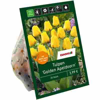 Tulpen 'Golden Apeldoorn' gelb 20 Zwiebeln